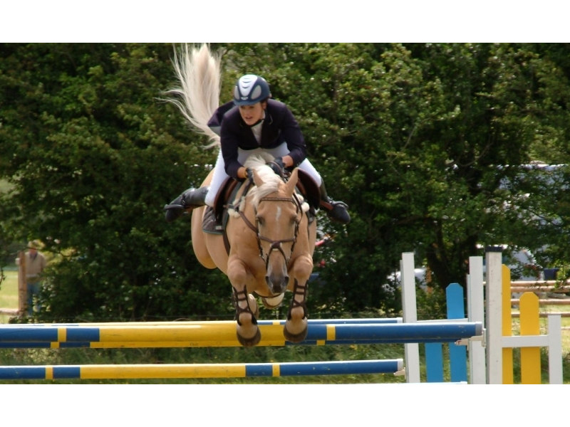 showjumping1-cropped.800.480.0.1.t